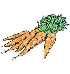 Carrots vector image
