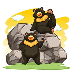 Two playful bears vector