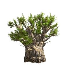 Baobab tree isolated vector image