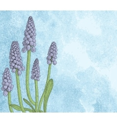 Grape hyacinth or muskari on grunge paper vector