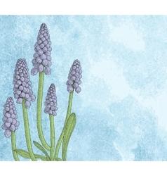 Grape hyacinth or muskari on grunge paper vector image