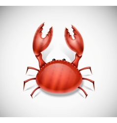 Isolated crab vector