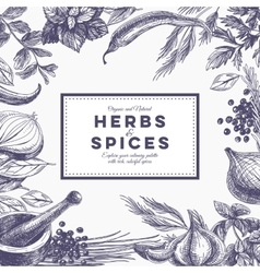 background with hand drawn herbs and spices vector image vector image
