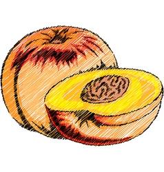 Peach vector image