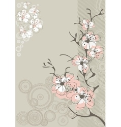 Sakura blossom on gray background vector