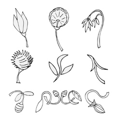 Set of sketches of flowers vector image