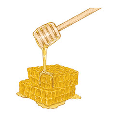 hand drawn set of honeycomb with honey stick vector image