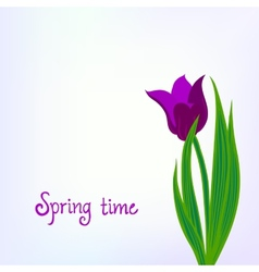 Spring card background with purple tulips vector image vector image