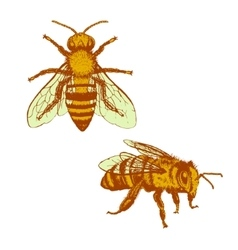 Bee vintage set vector image