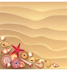 Shells sand vector