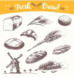 Set fresh bread drawn wheat vector
