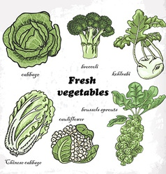 Set of cabbages - cauliflower Chinese cabbage vector image vector image