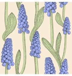 Seamless pattern with grape hyacinth vector