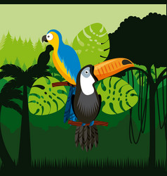 Toucan and macaw birds vector