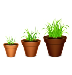 Growing grass vector