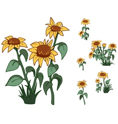 Flowers sunflowers vector