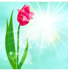 Spring card background with red tulip vector image vector image