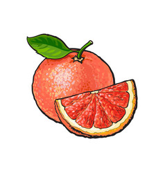 Whole and quarter piece of unpeeled ripe pink vector