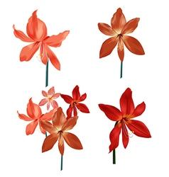 Amaryllis bud set vector image vector image