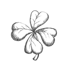 Clover sketch icon nature and garden concept vector