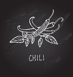 Hand drawn chili vector
