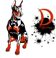 Dog doberman pinscher breed sitting vector