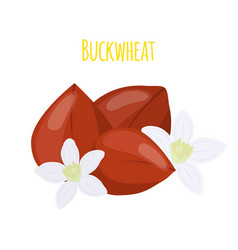 buckwheat seeds cereal grainsflat style vector image vector image
