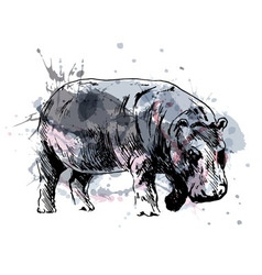 Colored hand drawing of a hippopotamus vector image vector image