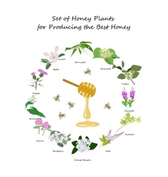 Honey planty set vector image vector image