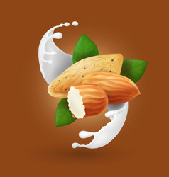 milk splash with almond nut realistic vector image vector image
