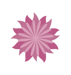 flower aster decoration image vector image