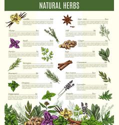 menu of spices and herbs seasonings sketch vector image vector image