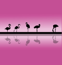 Flamingo lined at sunset scenery silhouettes vector