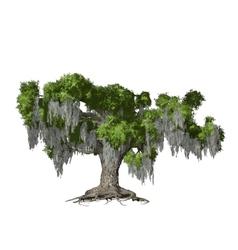 Oak tree isolated vector image