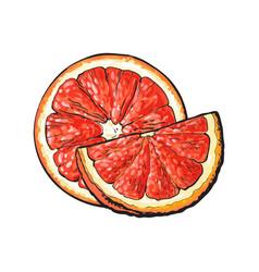 Half and quarter of ripe pink grapefruit hand vector