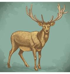 Engraving reindeer retro vector