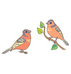 two finch vector image vector image