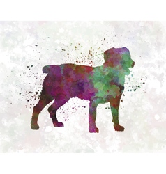 Appenzell cattle dog in watercolor vector