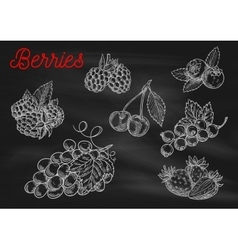 Berries chalk sketch icons on blackboard vector image