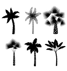 Decorative palm trees collection vector image