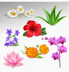 flowers plants realistic icons collection vector image