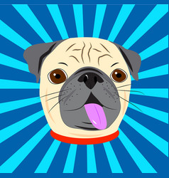 Face of cute pug with collar on blue starburst vector