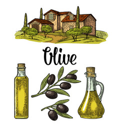 Set olive bottle glass branch with leaves rural vector