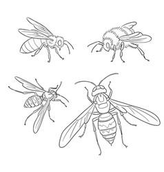 Bee wasp bumblebee hornet in outlines vector