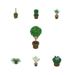 Isometric houseplant set of peyote blossom plant vector