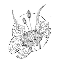 Lotus Flower Coloring Book Vector Image