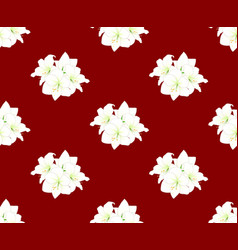 White amaryllis on red background vector