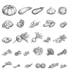 Sketch set of vegetables vector