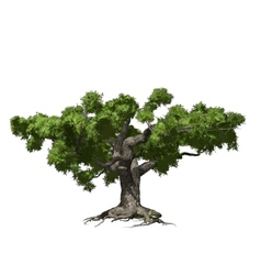 Oak tree isolated vector