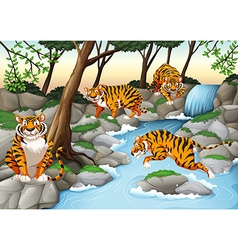 Four tigers living by the river vector